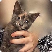 Adopt A Pet :: Mona - Long Beach, NY