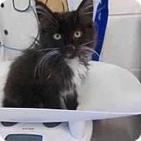 Adopt A Pet :: Turbo - Arlington, VA