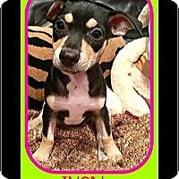 Adopt A Pet :: Ivey - Milton, GA
