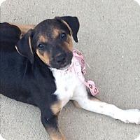 Adopt A Pet :: Dakota - Buffalo, NY