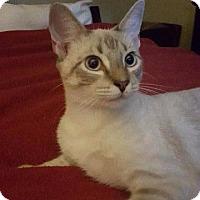Adopt A Pet :: Simon - Spring, TX