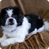 Adopt A Pet :: Beatrice VanCleve - Urbana, OH