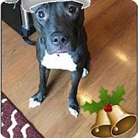 Adopt A Pet :: Kennedy - Fargo, ND