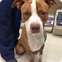 Adopt A Pet :: KYON - Dennis, MA