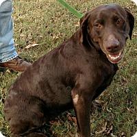 Adopt A Pet :: Nestle Solis - Wakefield, RI