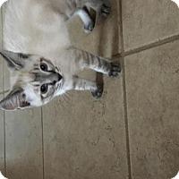 Adopt A Pet :: Lucas - ROSENBERG, TX