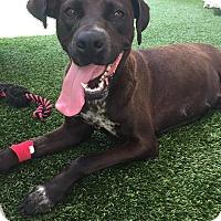 Adopt A Pet :: Freeda - Ft. Lauderdale, FL