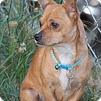 Adopt A Pet :: Nacho2 - Lynnwood, WA