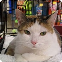 Adopt A Pet :: Princess - Port Republic, MD