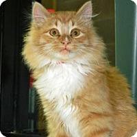 Adopt A Pet :: Pumpkin - Cheyenne, WY