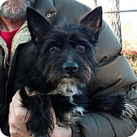 Adopt A Pet :: Carrie - Athens, GA