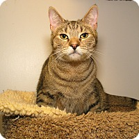 Adopt A Pet :: Molly - Milford, MA