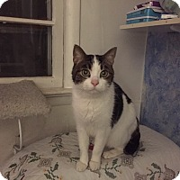 Adopt A Pet :: Karlton - Waldorf, MD