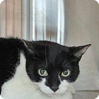 Adopt A Pet :: Kenneth  -  DECLAWED - Hamilton, ON