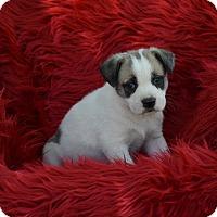 Adopt A Pet :: Steele - Groton, MA