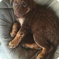 Adopt A Pet :: Karma - Henderson, NV