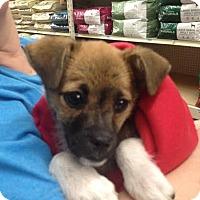 Adopt A Pet :: Huck - Blountstown, FL