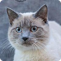 Adopt A Pet :: Ben - Cincinnati, OH