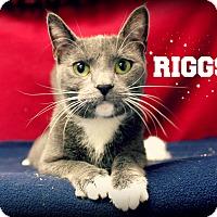 Adopt A Pet :: Riggs - Melbourne, KY