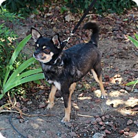 Adopt A Pet :: Jasper - Yuba City, CA