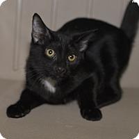 Adopt A Pet :: Kingsley - Medina, OH