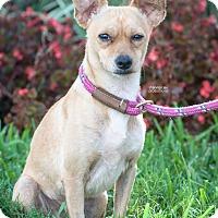 Adopt A Pet :: JP - Gainesville, FL