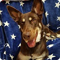 Siberian Husky Mix Dog for adoption in Yucaipa, California - Ducky Ledecky