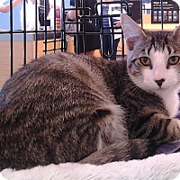 Adopt A Pet :: Brontes - Richmond, VA