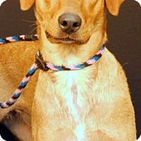 Adopt A Pet :: Lyric - Newland, NC