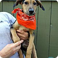 Adopt A Pet :: Mayer - Kimberton, PA