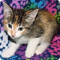 Adopt A Pet :: Sassy - Watauga, TX