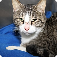 Adopt A Pet :: Roscoe (Neutered) - Marietta, OH