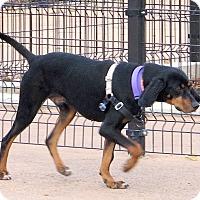 Adopt A Pet :: Waylon - New York, NY