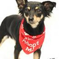 Adopt A Pet :: ABBY - Tomball, TX