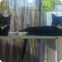 Adopt A Pet :: Duchess - Calimesa, CA