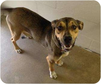 Shepherd (Unknown Type) Mix Dog for adoption in Winter Haven, Florida - Xena