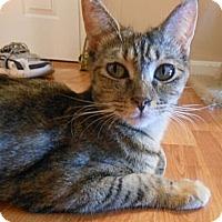 Adopt A Pet :: Terri - Reston, VA