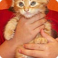 Adopt A Pet :: Daina - Reston, VA