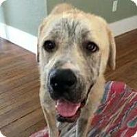 Adopt A Pet :: Dorothy - Austin, TX