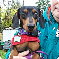Adopt A Pet :: Max - West Bloomfield, MI