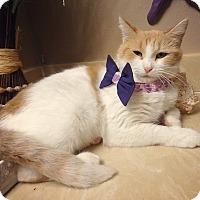 Adopt A Pet :: Emily - Bentonville, AR