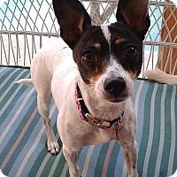 Adopt A Pet :: Meechee Munchie - Jacksonville, FL