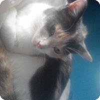 Adopt A Pet :: Callie - Bay City, MI