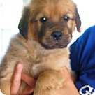 Adopt A Pet :: Rhett