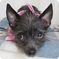 Adopt A Pet :: Fran, Loving Cuddlebug - LA, OC, SD, CA