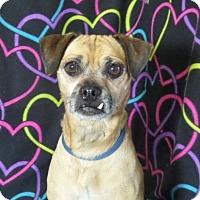 Adopt A Pet :: Jack - Mukwonago, WI