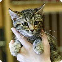 Adopt A Pet :: Pasta - Kettering, OH