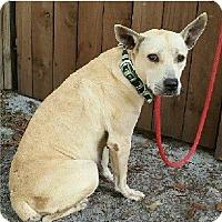 Adopt A Pet :: Puck - Gainesville, FL