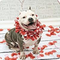 Adopt A Pet :: Audree - West Allis, WI