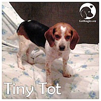 Adopt A Pet :: Tiny Tot - Pittsburgh, PA